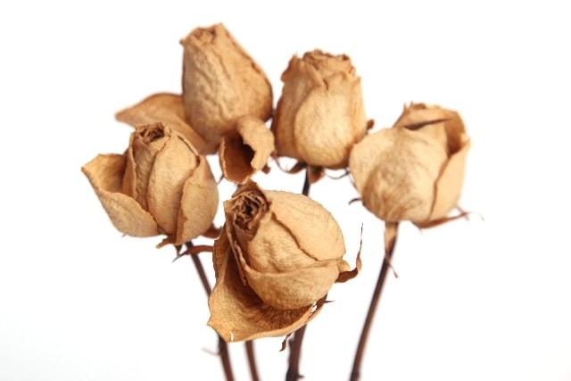 花が枯れる原因!花瓶の置き場が地獄エリア!?